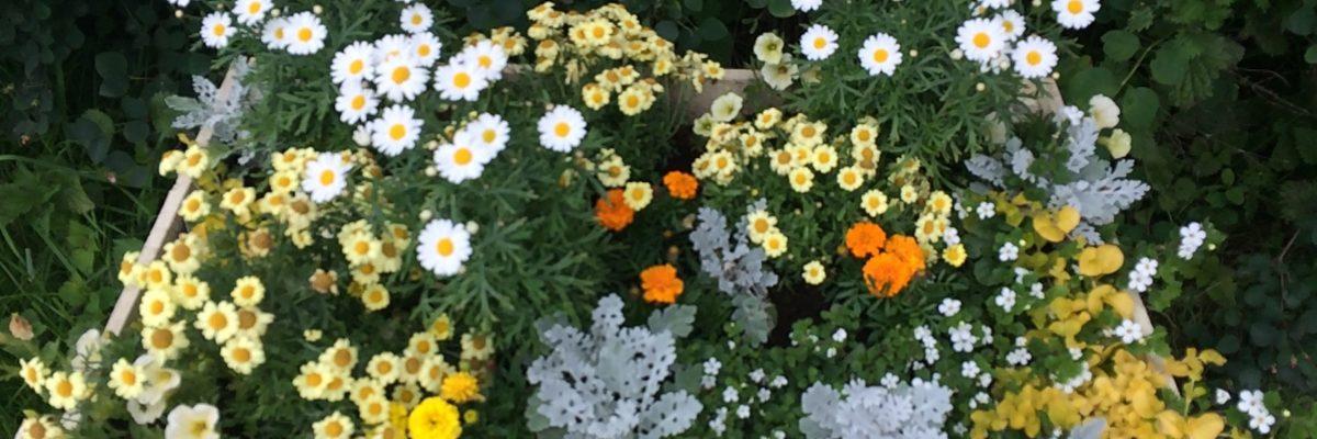 Beadnell flowers